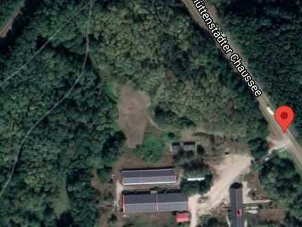Waldgrundstück zu verkaufen - nahe Frankfurt/Oder - Kaufangebot erbeten!