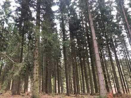 Fichtenwaldfläche - 20 ha - bei Pfaffroda