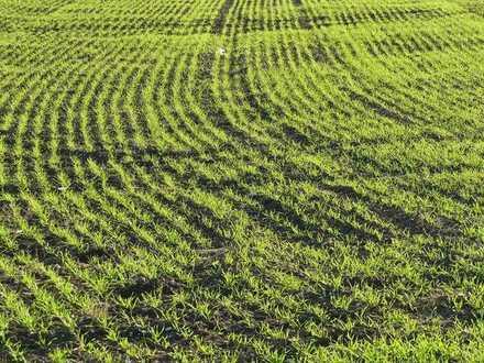 Es liegt zu Ihren Füßen! Wertvolles Ackerland mit über 1,3 ha bei Amerdingen zu verkaufen