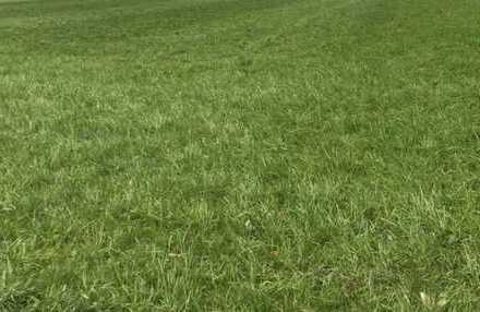 Brück Immobilien - Diverse landwirtschaftliche Flächen im Umkreis Weilheim an der Teck