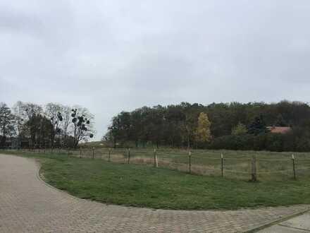 Baugrundstück in der Gemeinde Gollenberg - Ortslage Schönholz - zu verkaufen