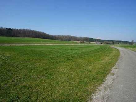 *** Grünlandfläche in der Gemarkung Billenhausen ***