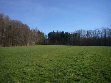 Grosses sonniges Wiesen-Grundstück / Grünland am Waldrand