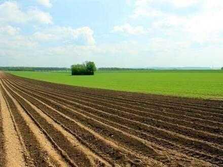 Investieren Sie in eine attraktive Ackerlandfläche in Nordfriesland