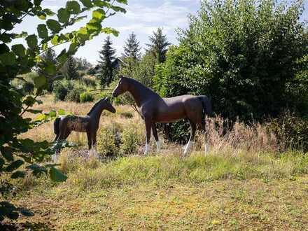 Ruhig angelegtes Feriendomizil mit ausreichend Wiesenflächen und Stallungen zu verpachten