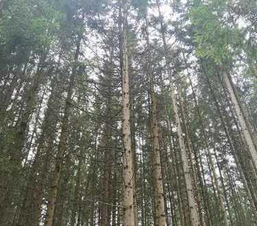 Oberfinning/Hart - Waldfläche mit gesundem Baumbestand (Fichte) - 60/70 Jahre alt
