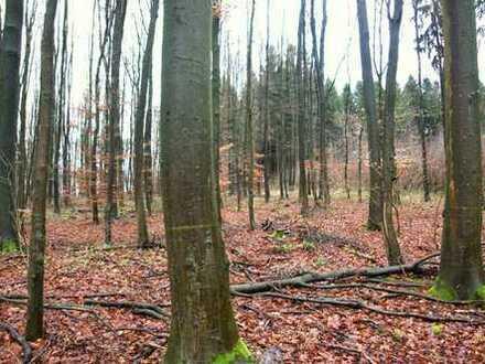 Waldflächen mit angrenzender Kleingartenanlage in Hagen