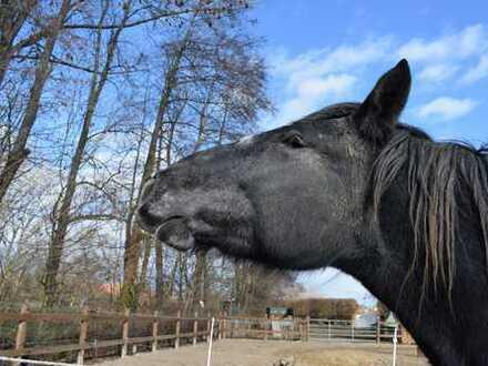 Sie bringen Ihre Pferde einfach mit! Ländliche Idylle im kernsanierten Schmuckstück in Braunschweig