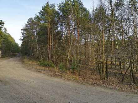 Wald- und Holzungsflächen in Hoyerswerda