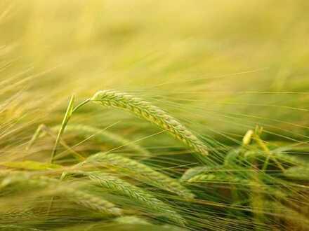 Landwirtschaftliche Fläche am Rande von Hochemmingen