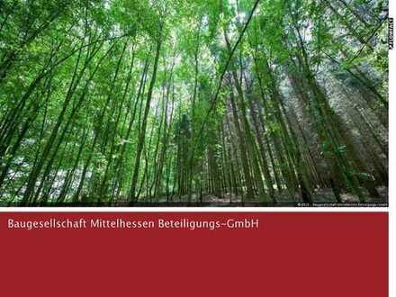 Waldgrundstück mit altem Baumbestand in Altdorf