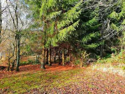 Provisionsfrei! Schönes Baugrundstück (Hanglage) in Namborn-Baltersweiler