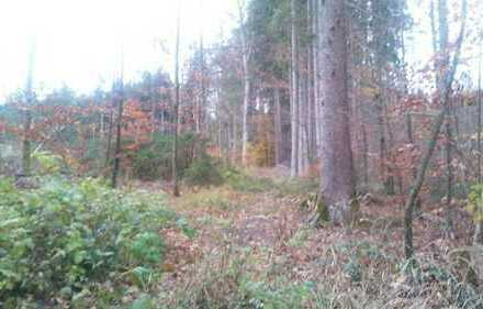 + Schöner Wald am Ortsrand + Reine Kapitalanlage oder zur Selbstnutzung +