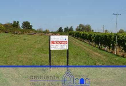 **NEU**Für landwirtschaftliche Nutzung privilegiertes Grundstück in Maikammer