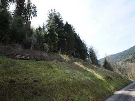 Landwirtschaftliche Flächen in Bad Rippoldsau-Schappbach