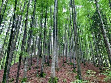 Traumhaftes Bergwaldgrundstück bei Ohlstadt