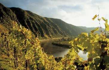 Sehr erfolgreich geführtes ***superior Ferien-Landhotel im Herzen der Ausflugs- und Weinregion Mosel
