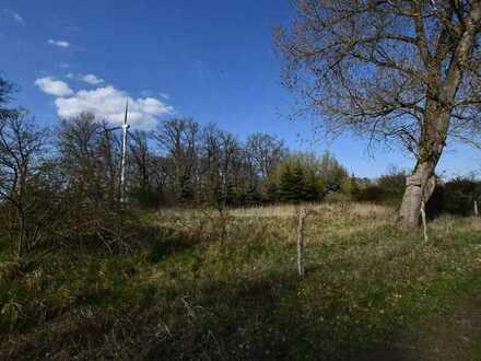 0,7 ha Grünfläche (ehemalige Deponie)