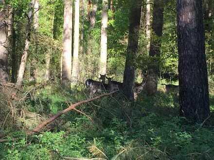Forst- und Jagdbesitz in Brandenburg!