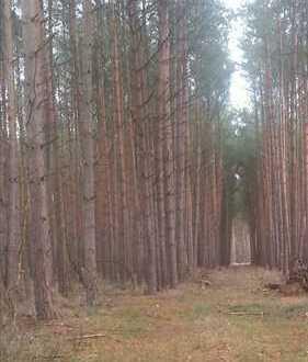 126 Hektar Acker und Wald