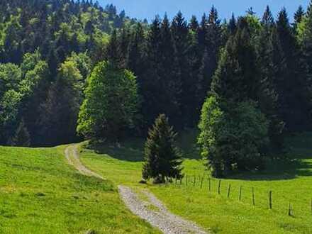 Bergwaldgrundstück Nähe Arzbach, Obj-Nr. T/0424-2