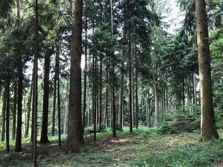 Baumbestand von jung bis alt