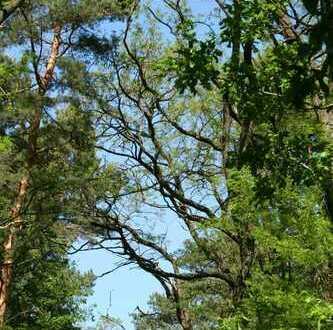 Waldgrundstück in Ortsrandlage von Jeserig!