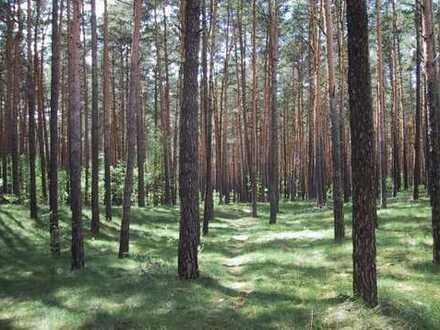 Wald - Landkreis Mühldorf - ab 1 m² Teileigentum möglich, Gründung einer Waldbesitzergenossenschaft