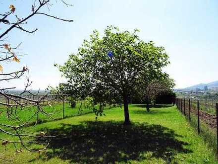 Traumhafter Garten am Mandelblütenweg Richtung Gimmeldingen zu verkaufen.