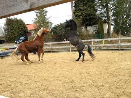 Jetzt Traum erfüllen! Liebevoll renoviertes Bauernhaus mit genehmigter Pferdehaltung zu verkaufen.
