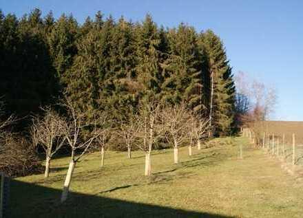 1,25 ha Wald mit großer Holzhütte für Unterstellung /Stallung u. Obstbaumbestand bei Fürsteneck