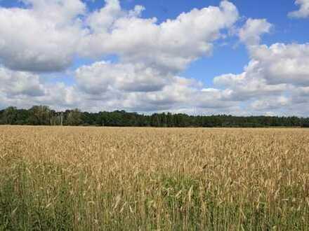 HORN IMMOBILIEN ++ landwirtschaftliche Nutzfläche bei Torgelow