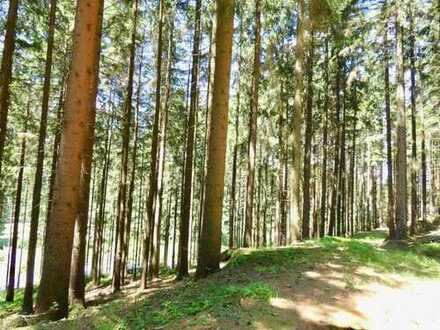 Waldfläche bei Pleystein