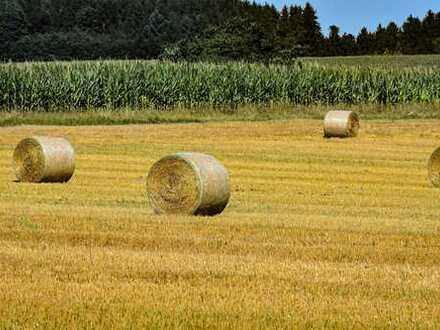 6,3461 ha landwirtschaftliche Flächen in Hagermarsch