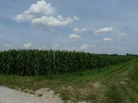 Landwirtschaftsfläche Lkrs. DAH nahe 85716 Unterschleißheim, Riedmoos