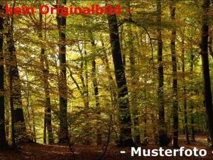 Forstwirtschaftliche Nutzfläche Gemarkung Flachslanden!