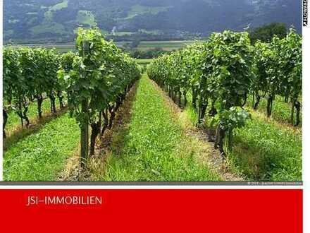 Nur noch zwei Weinberge in guter Lage im Bereich Bad Dürkheim, einer davon ist hier !