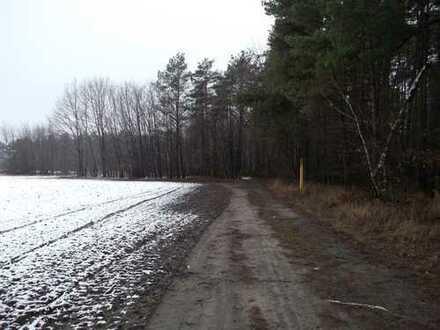 Waldfläche mit Weg