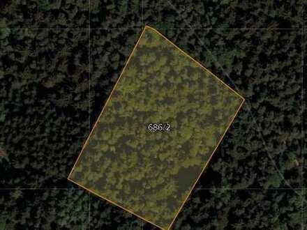 Waldfläche bei Sattelberg zu verkaufen!
