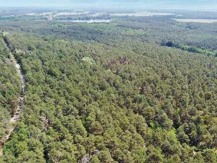 6. LIVE-AUKTION 2021: Unbebautes Grundstück/Waldfläche