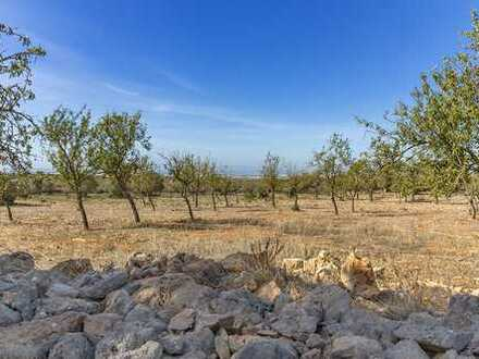 Fantastisches Grundstück mit Baulizenz kaufen in Marratxi, Mallorca