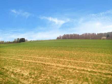 Landwirte aufgepasst! Große Ackerfläche für Selbstversorger