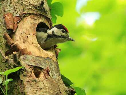 An der Natur und in der Natur wohnen wo andere Urlaub machen!!!!