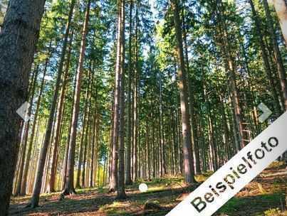 Waldfläche im Havelland