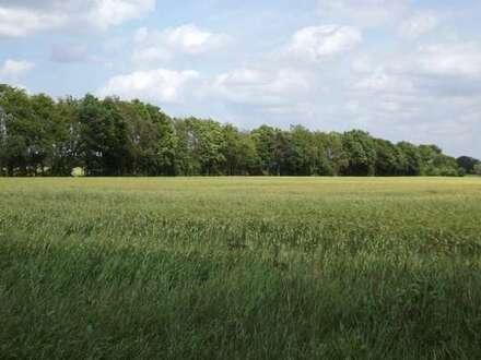 """22 ha landwirtschaftliche Nutzfläche """"Grünland"""" in Ovelgönne meistbietend zu verkaufen"""