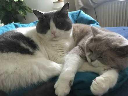 Katzenlieber Mitbewohner gesucht!!