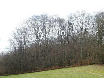 GANESHA-IMMOBILIEN...hervorragender Wald in bester Lage zu verkaufen !