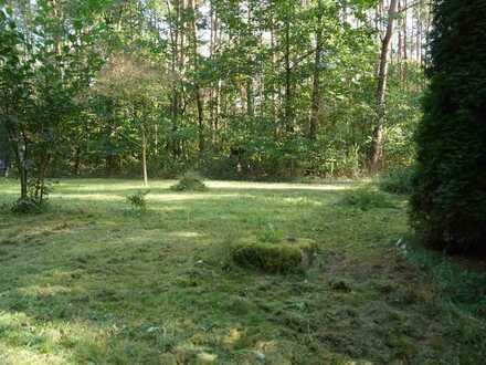 21.800 m² Mischwald, u.a. Robinie und Ahorn in Storkow