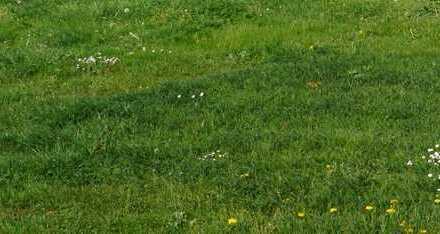 Bauplatz! Grundstück zum bebauen - ohne Bauzwang in Brunnen - Von Ihrem Immobilienpartner: SOWA I...