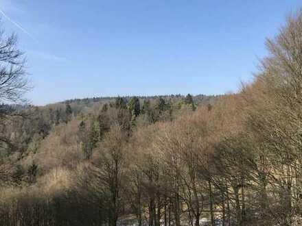 Zwei große Waldgrundstücke (ca. 6,4 ha) bei Weigendorf mit Hütte zu verkaufen